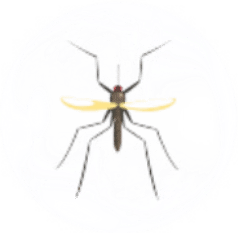 Mosquito Pest Control for Sevierville TN and Surrounding Areas