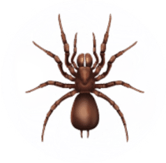 Spider Pest Control for Sevierville TN and Surrounding Areas