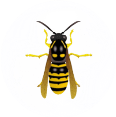 Bee and Wasp Pest Control for Sevierville,TN and Surrounding Areas